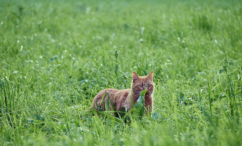 Franse bioboer zet katten in tegen knaagdieren