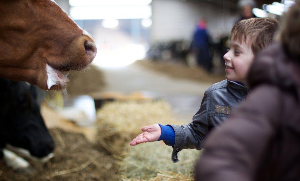 De gemiddelde Nederlandse boer verdiende €70.000 in 2017