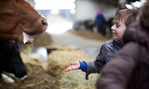 Afschaffen fiscaal voordeel bij overdracht boerderij betekent einde familiebedrijf