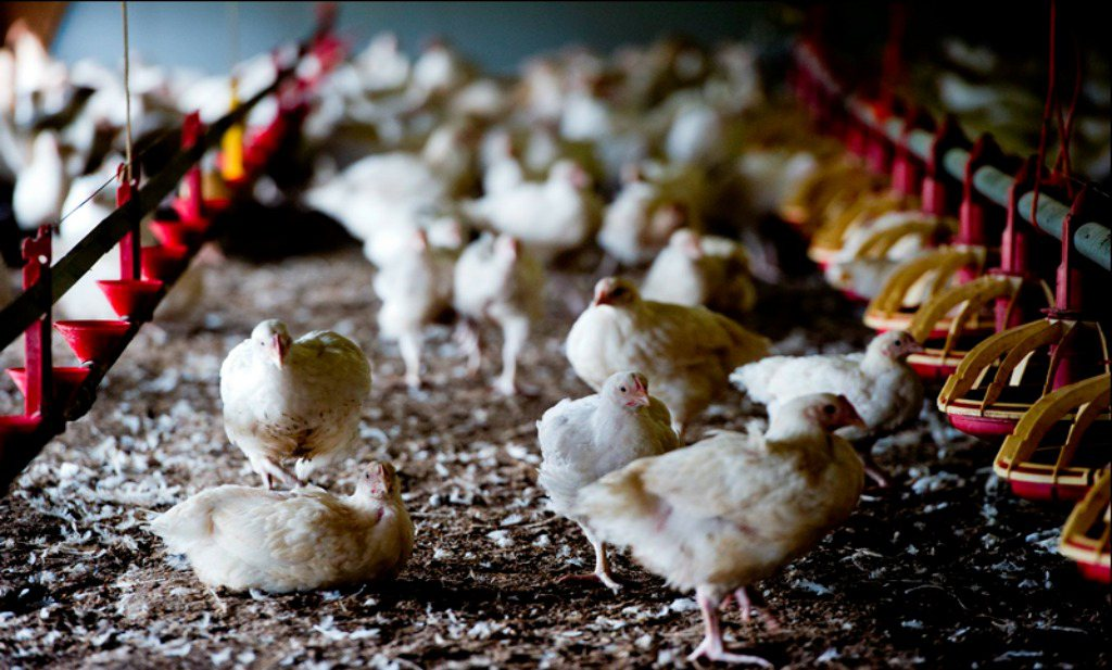 Europese ministers willen EU-breed dierenwelzijnslabel