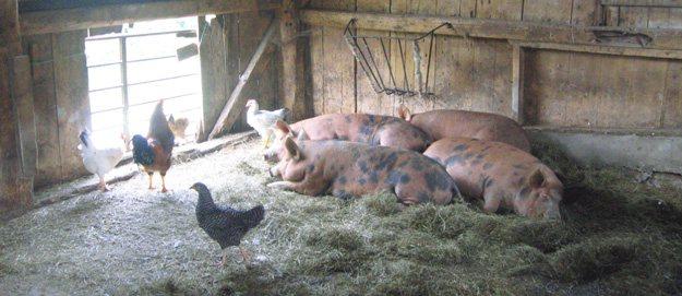 CBL: boeren moeten ondernemen in plaats van kostenvergoedingen vragen