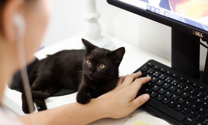 Kattenonderzoek moet het duidelijk maken