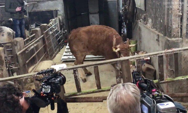 Koe Hermien gevangen, koe Zus al in rusthuis