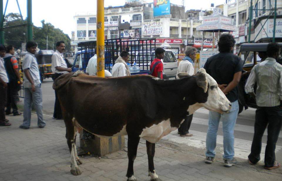 India hoopt op forse export zuivel en vlees naar Rusland
