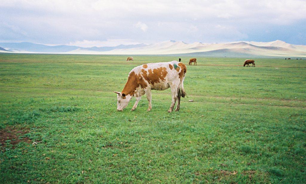 Henk Bleker zet Mongoolse zuivelketen op