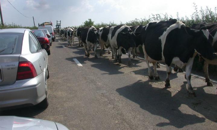 Factcheck: Is de Europese veeteelt slechter voor het klimaat dan alle auto's?
