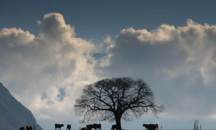 Bomen op akkers helpen tegen klimaatverandering