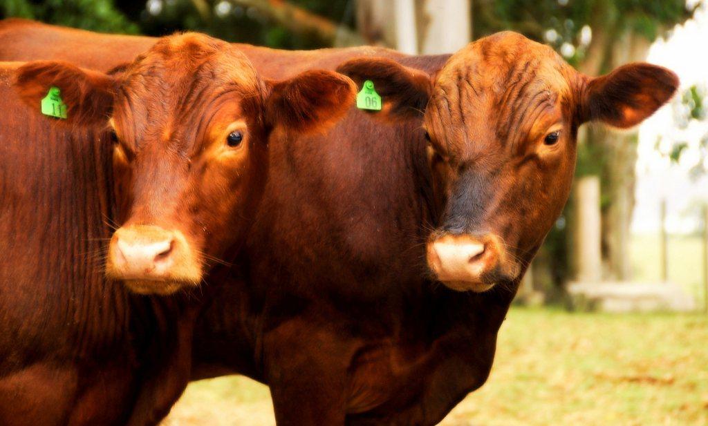 Meer vlees, meer concurrentie en nog 'duurzamer' ook
