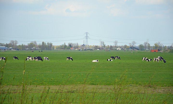 Milieudefensie uit overleg 'koe in de wei'