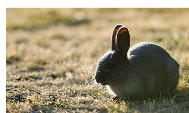 Dierenopvang controleert of konijn buiten pan blijft
