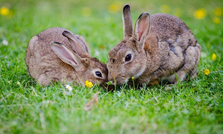 Hoeveel dieren worden er iedere dag geboren?