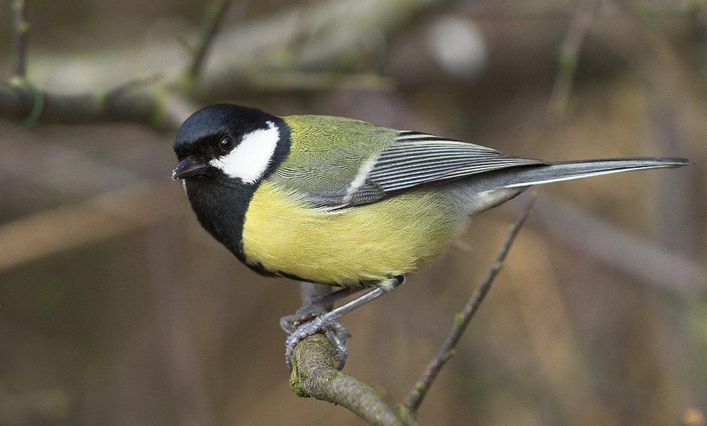 'Natuurbeheerder mee schuldig aan gebroken vogelpootjes'
