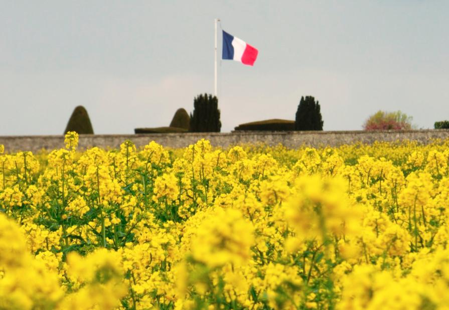 Met ingang van vandaag zijn in Frankrijk 7 neonicotinoïden verboden