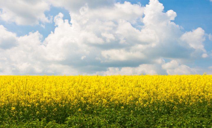 BASF betaalt €6 miljard voor zaden en onkruidbestrijders van Bayer