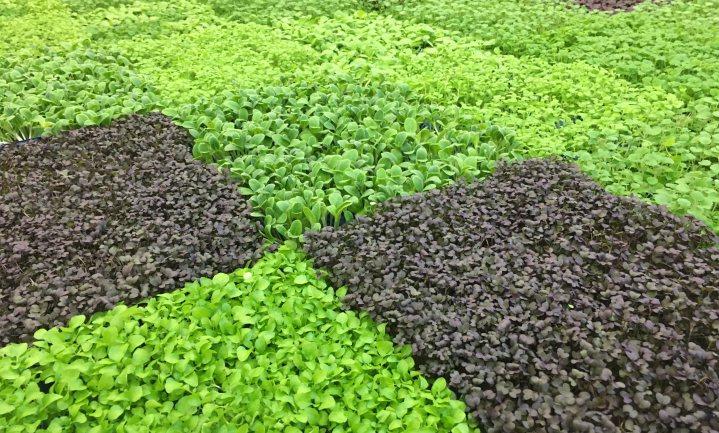 €650 miljoen extra coronasteun voor sierteelt, voedingstuinbouw en frietaardappeltelers