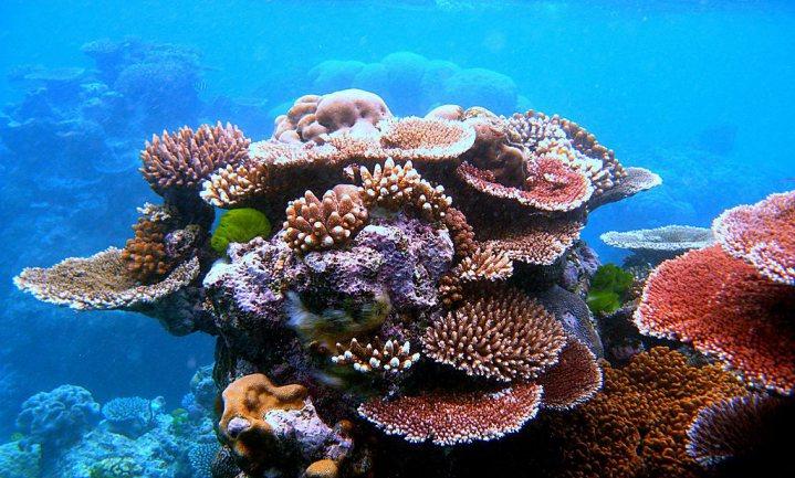 Toekomstige koraalriffen zullen niet meer op historische lijken