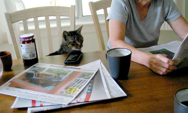 Amsterdamse kat 'Chef ongediertebestrijding' krijgt grafzerk