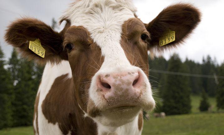Duitse deelstaatministers ruziën over steun aan melkveehouders