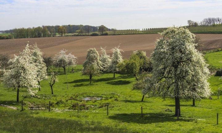 Belgische boerenvertegenwoordigers vinden supermarkt als landbouwgrondbezitter geen goed idee