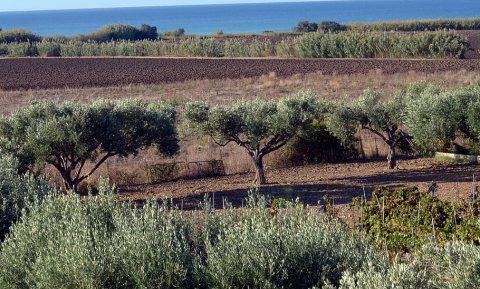 Tropisch fruit op Sicilië, prima. Maar koffiestruiken ook?