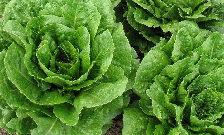 Ook grote deeltjes microplastics dringen door in groente en fruit