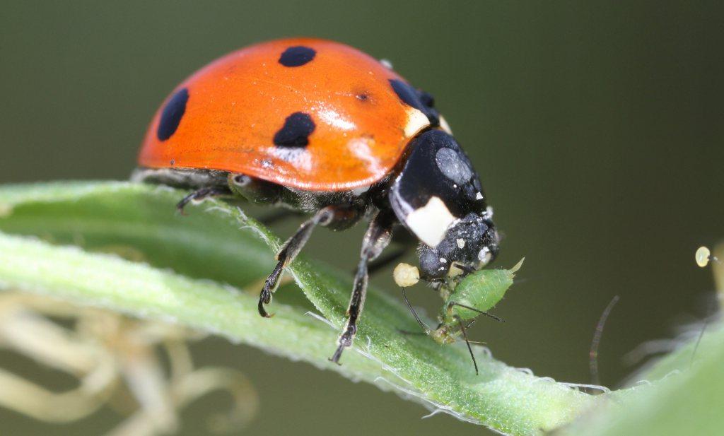 Van chemische bestrijding naar ecologische gewasbescherming