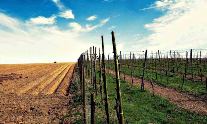 Bodem niet te proeven in Nederlandse wijn