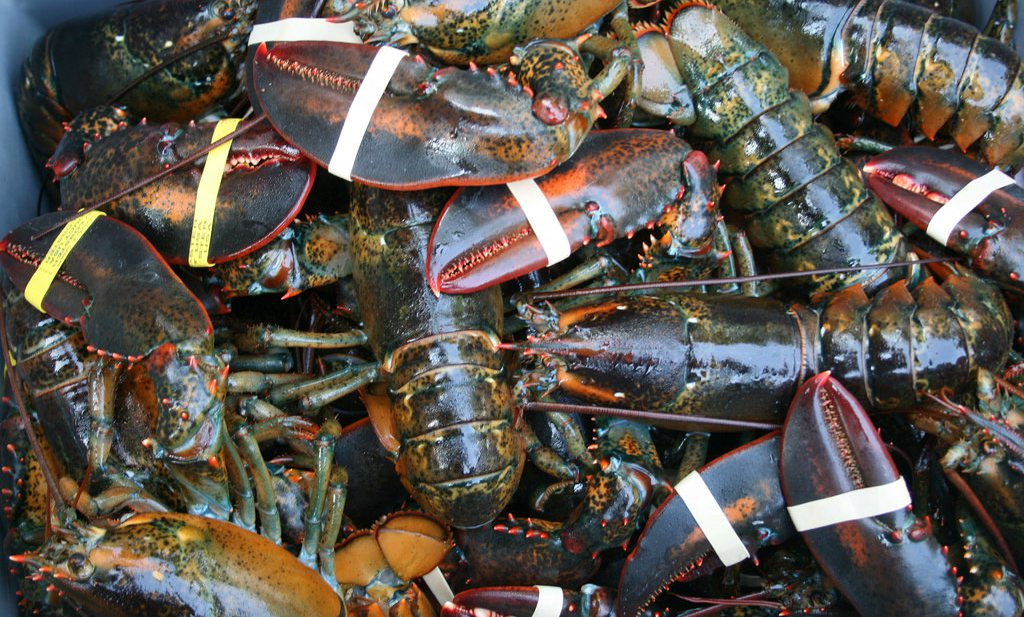 Kreeft- en garnaalvisserij is even schadelijk voor klimaat als veeteelt