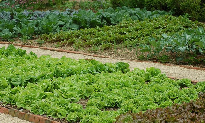 'Eigen transparante agricultuur voor Engeland'