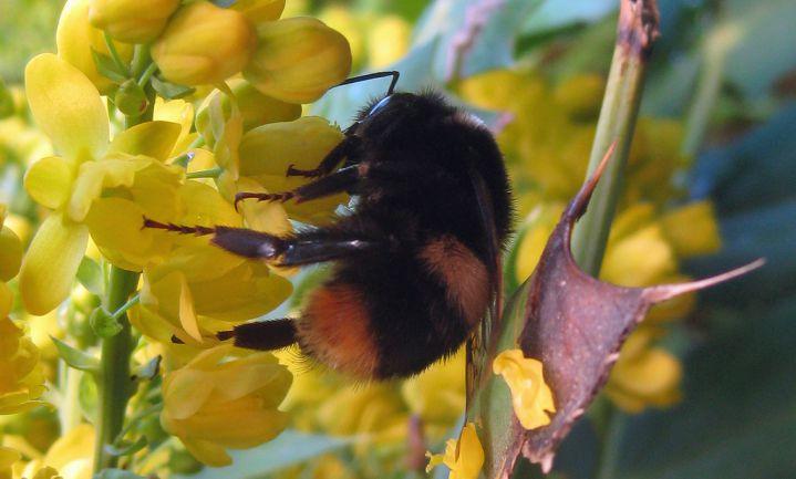 Britten moeten bijen helpen overwinteren