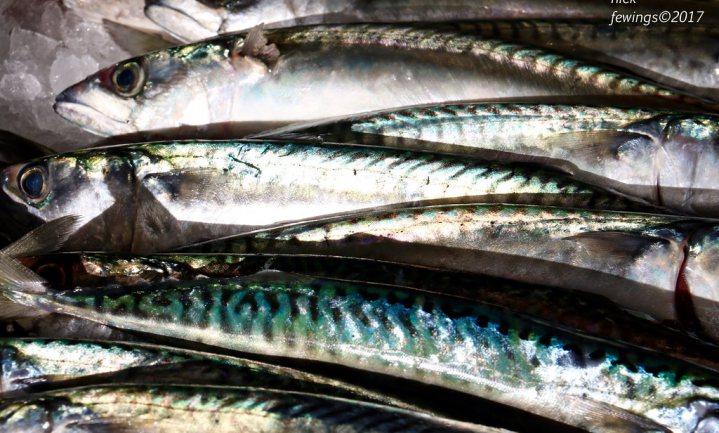 Foutje in rekenmodel kost makreelvisserij certificering