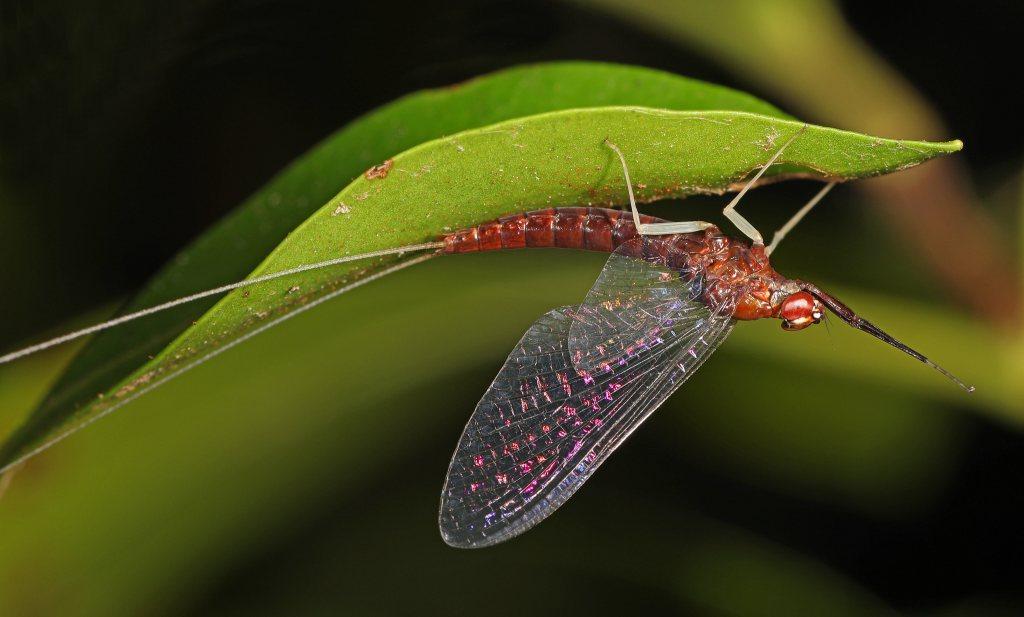 Goed nieuws: insecten kunnen zich razendsnel herstellen als je de juiste maatregelen neemt