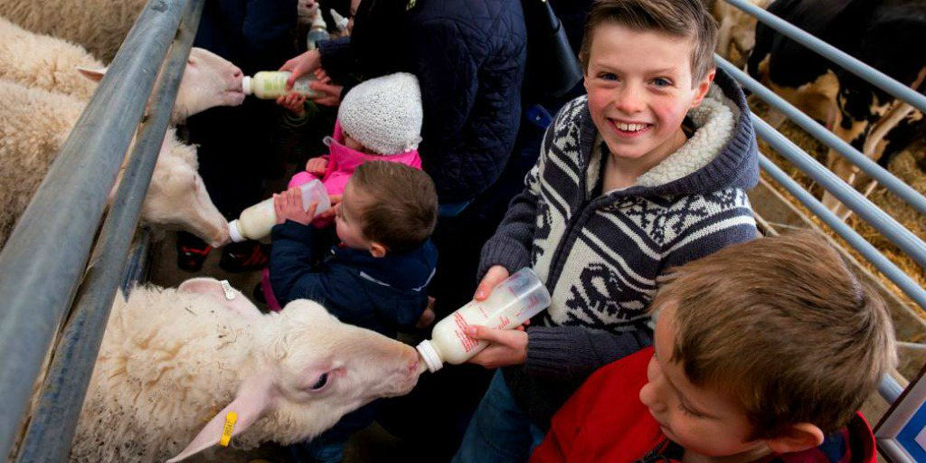 4 op de 5 Britse lagere schoolkinderen willen naar boerderij