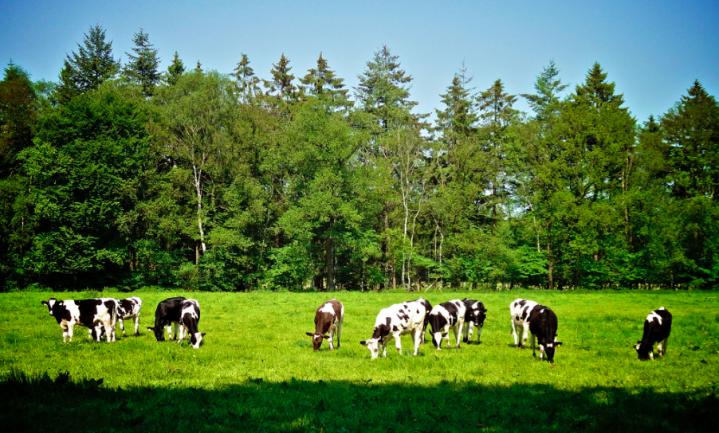 Spectaculaire stijging gentech-vrije melk in Duitsland
