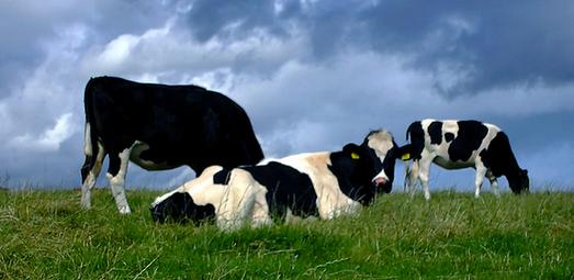 En als we het broeikasgas nu eens uit de koeien fokten?