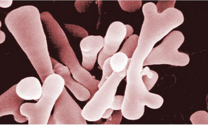 We bestaan uit meer microben dan uit menselijke cellen