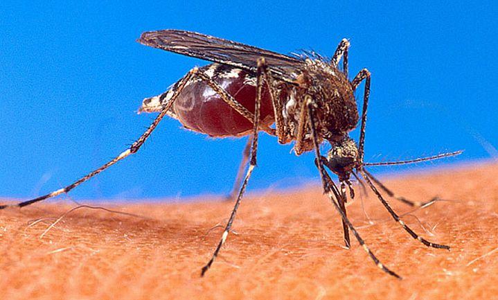 Zika-bestrijding doodt miljoenen honingbijen