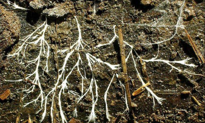 Planten praten met elkaar via het wood wide web