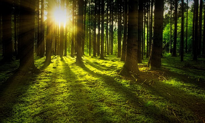 Toen bos weer natuur werd