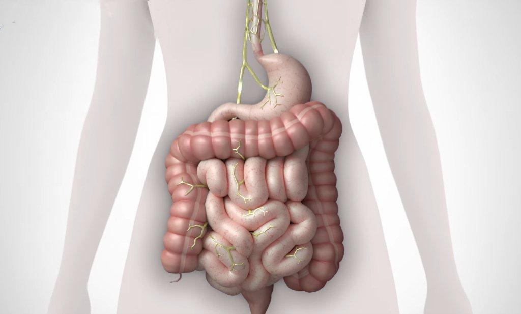 FODMaP-dieet kan helpen bij prikkelbare darm