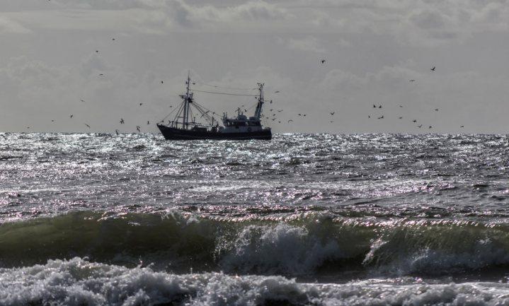 Engelse top 5 'Goede vis' verandert door naderende Brexit