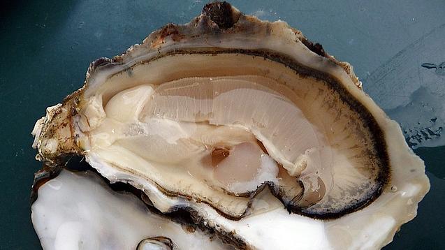 Opwarming zeewater maakt eten schaal- en schelpdieren risicovoller