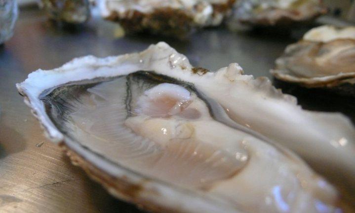 Eerste oesterkwekerij op land na 5 maanden failliet