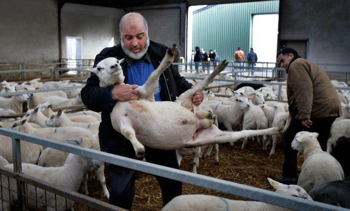 Dieren binnenkort 'wezens met gevoelens' in Wallonië