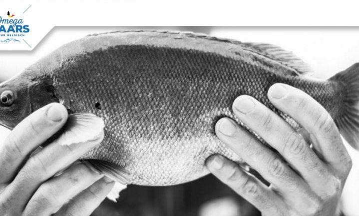 Culinair ontdekt: Omegabaars