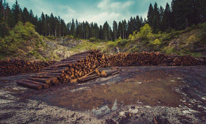 Voedingsmiddelenindustrie kan niet garanderen dat je onschuldig bent aan ontbossing