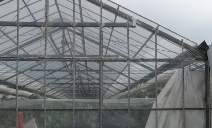 Rabobank koopt glastuinbouwbedrijven in