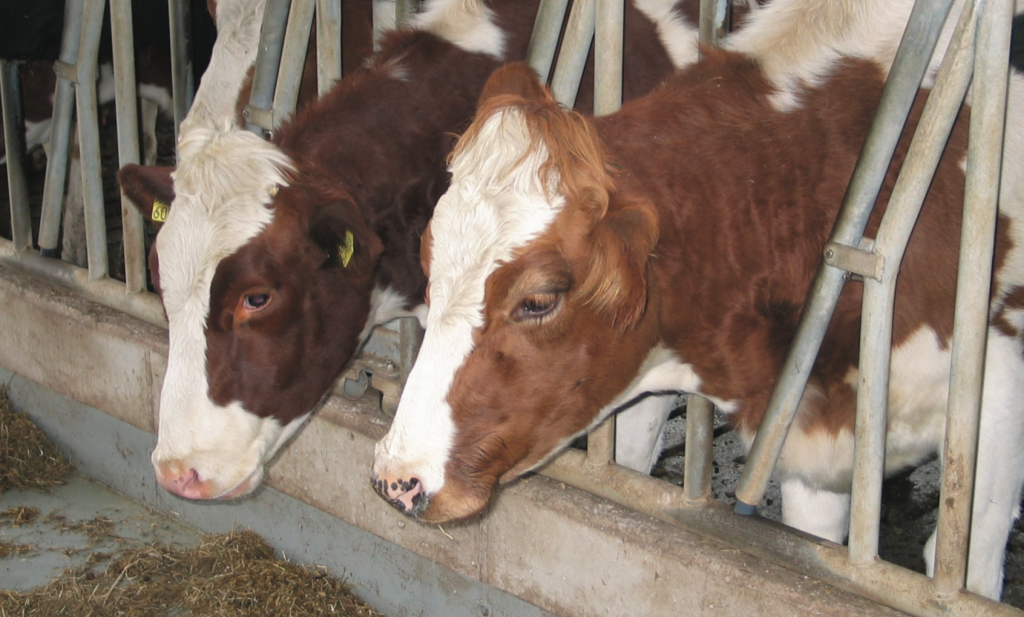 PBL en WUR publiceren achterhaald rapport melkveehouderij