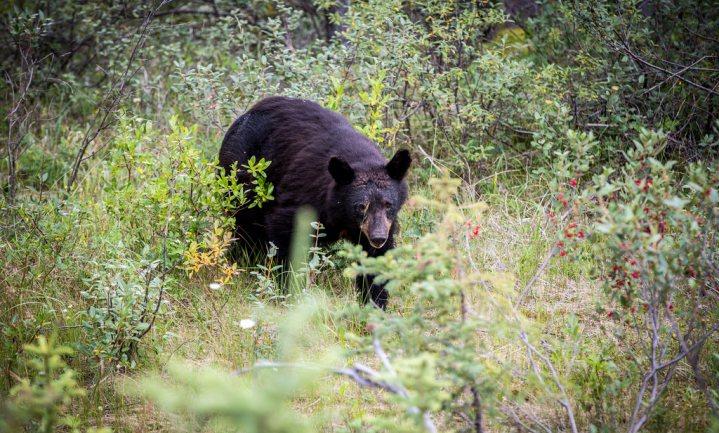 Twijfel bij berenbeelden