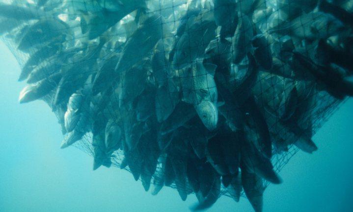 '20% van de vis is illegaal gevangen', big data gaat het tegen